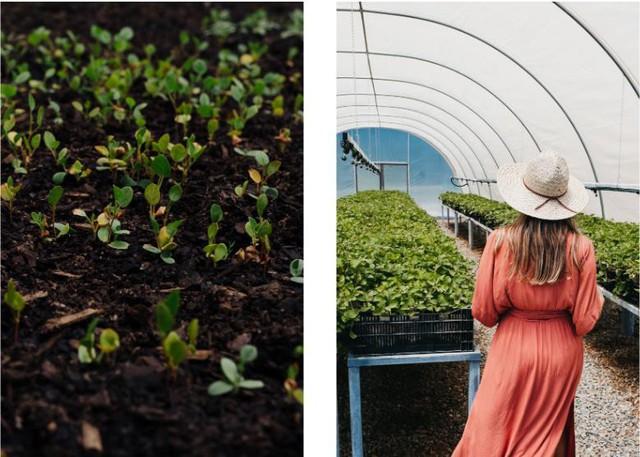 Vòng quanh thế giới: Ghé thăm những trang trại Organic siêu xinh - Ảnh 6.