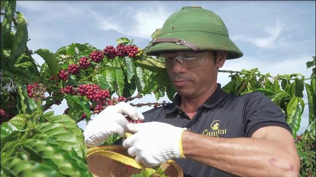 Doanh nghiệp cà phê hữu cơ đạt Giải Vàng Chất lượng Quốc gia - Ảnh 1.
