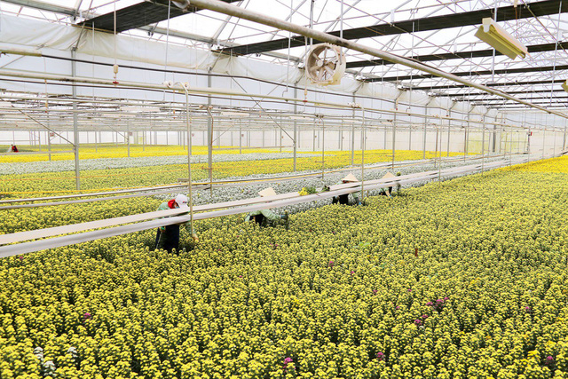 Quy mô và chất lượng là yếu tố tiên quyết để hoa tươi Việt Nam vươn ra thế giới - Ảnh 2.