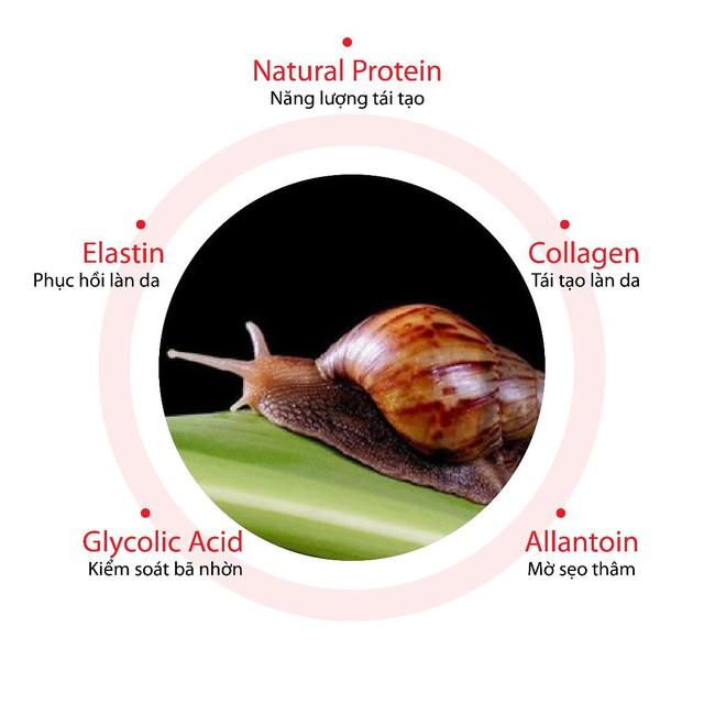 """Tinh chất ốc sên Snail Truecica liệu có """"thần thánh"""" như lời đồn? - Ảnh 2."""