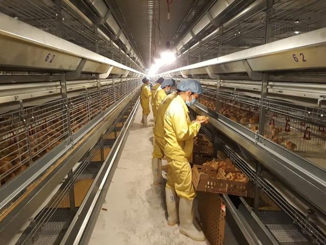 Thị trường ngành gia cầm dần phục hồi, người chăn nuôi an tâm mở rộng quy mô đầu tư - Ảnh 3.