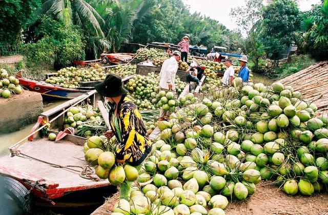 Thương hiệu mỹ phẩm Việt hứa hẹn sẽ cải thiện đáng kể cuộc sống của người nông dân trồng dừa - Ảnh 2.