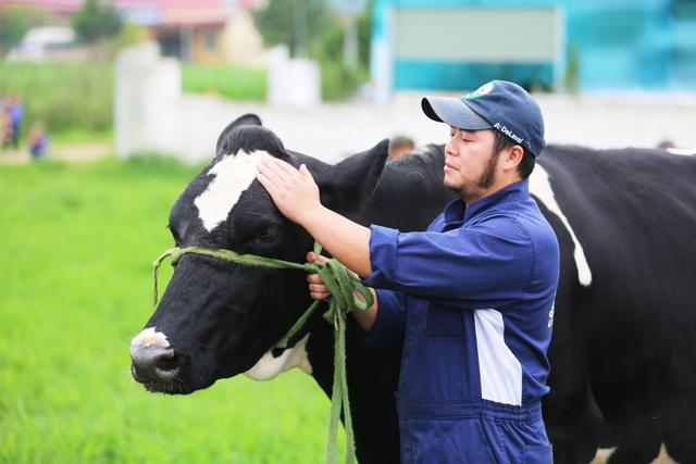 Bò sữa nô nức đi trẩy hội Hoa Hậu Bò Sữa 2018 tại Mộc Châu - Ảnh 1.
