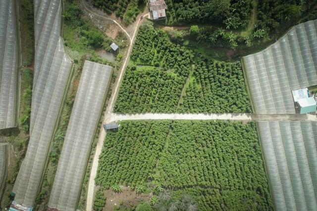 Trương Anh Ngọc - Hành trình đi tìm chất của cà phê Việt - Ảnh 1.