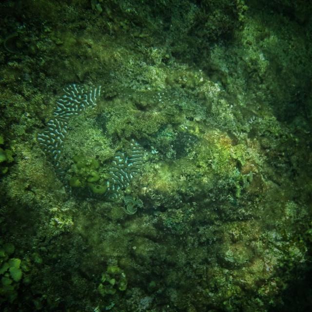 Thăm thú thiên đường san hô tuyệt đẹp cùng Galaxy A 2017 - ảnh 1