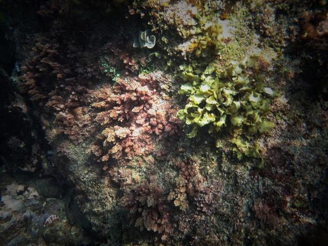 Thăm thú thiên đường san hô tuyệt đẹp cùng Galaxy A 2017 - ảnh 2