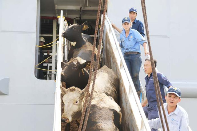 Vinamilk nhập hơn 2.000 con bò sữa cao sản từ Mỹ, tiếp tục khẳng định vị thế dẫn đầu ngành hàng sữa - Ảnh 3.