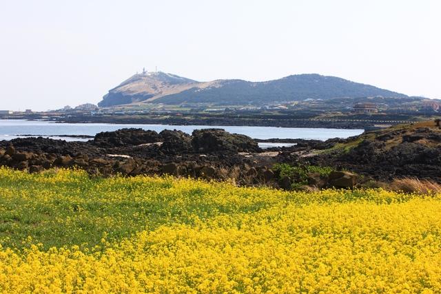 Hàn Quốc – Thiên đường xanh mướt hạ về, đỏ lá thu sang - Ảnh 5.