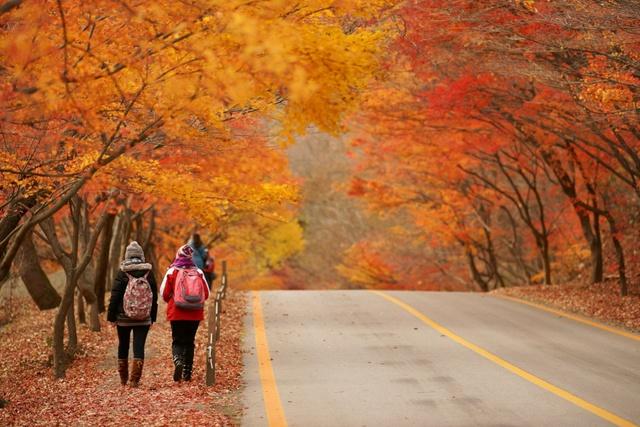 Hàn Quốc – Thiên đường xanh mướt hạ về, đỏ lá thu sang - Ảnh 14.