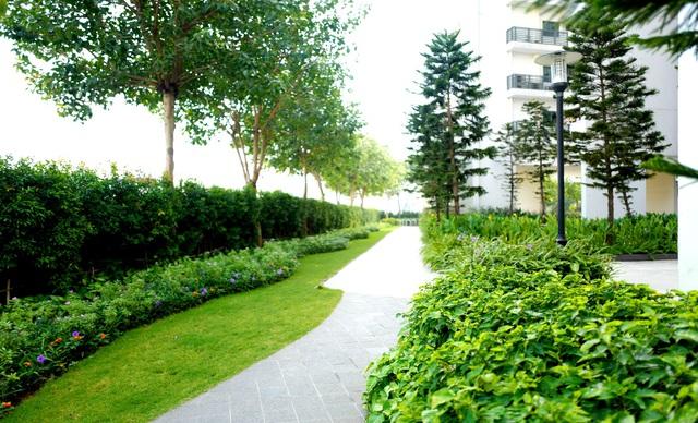 Cung đường đi bộ trong dự án phủ cây xanh với hàng rào xanh lên đến 700m.