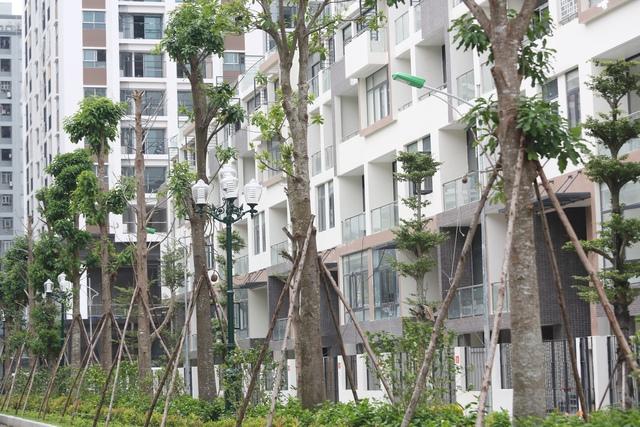 Chủ dự án cho trồng rất nhiều cây xanh trong khuôn viên.