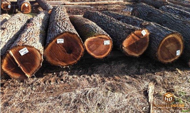 Nội thất hiện đại và sang trọng với gỗ óc chó tự nhiên - Ảnh 2.