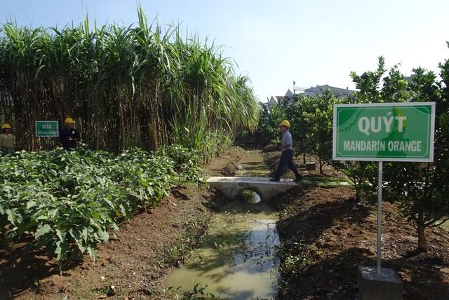 Hòa hợp cùng môi trường – nguyên tắc vàng cho sự phát triển bền vững - Ảnh 2.