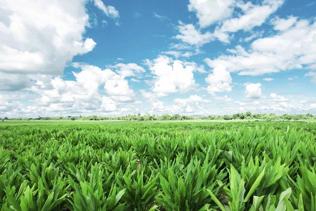 Mỹ phẩm tự nhiên Việt Nam – Gian nan chinh phục người tiêu dùng - Ảnh 1.