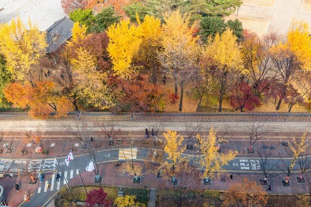 Den ngay Seoul di, ngam con duong la do lang man nhu trong phim Han