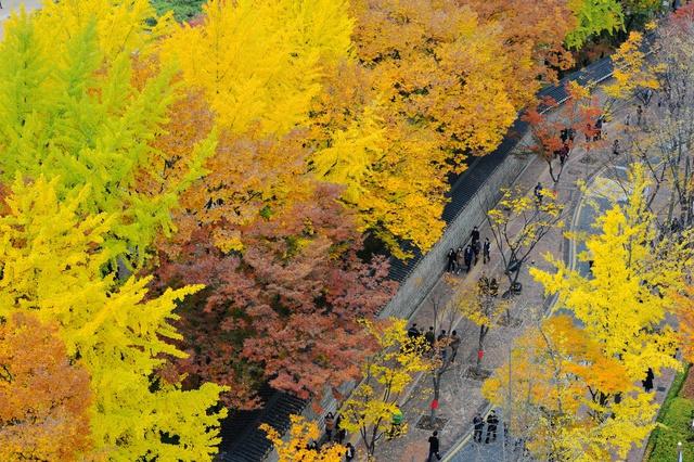 Đến ngay Seoul đi, ngắm con đường lá đỏ lãng mạn như trong phim Hàn - Ảnh 4.