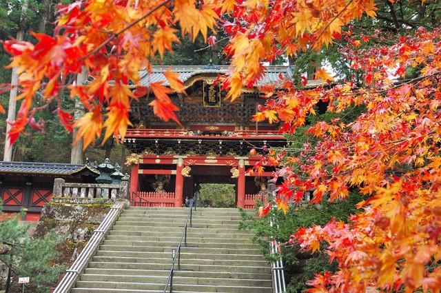 Hai địa điểm thú vị du khách không thể bỏ lỡ khi đến Hàn Quốc, Nhật Bản - Ảnh 1.
