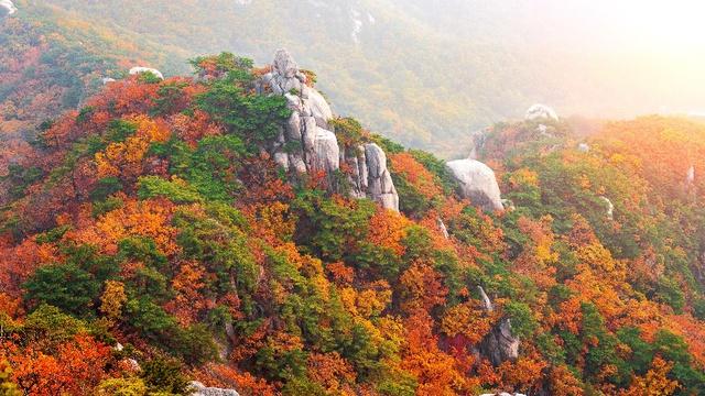 Đến Hàn Quốc ngay đi, lá chuyển sang màu đỏ rồi - Ảnh 8.