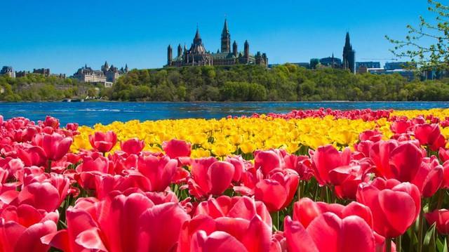 Du học Canada – Lựa chọn hàng đầu để đạt đến thành công - Ảnh 2.
