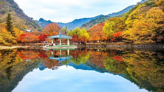 Đến Hàn Quốc ngay đi, lá chuyển sang màu đỏ rồi - Ảnh 1.