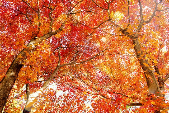 Đến Hàn Quốc ngay đi, lá chuyển sang màu đỏ rồi - Ảnh 2.
