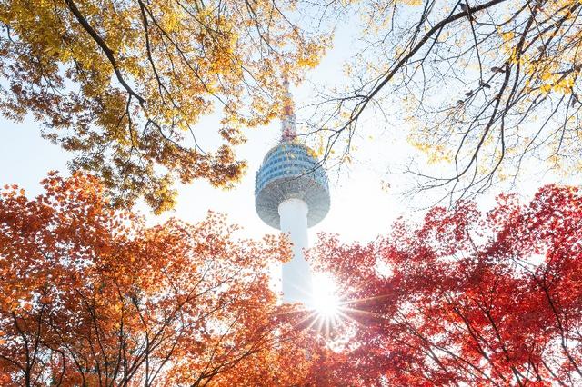 Đến Hàn Quốc ngay đi, lá chuyển sang màu đỏ rồi - Ảnh 3.
