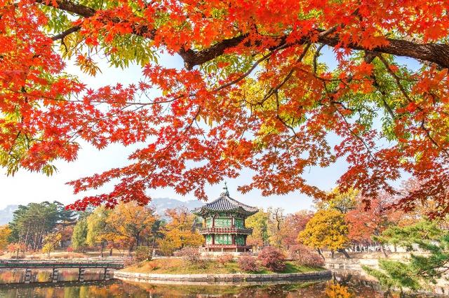 Đến Hàn Quốc ngay đi, lá chuyển sang màu đỏ rồi - Ảnh 4.