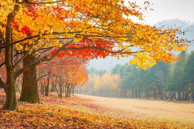 Đến Hàn Quốc ngay đi, lá chuyển sang màu đỏ rồi - Ảnh 5.