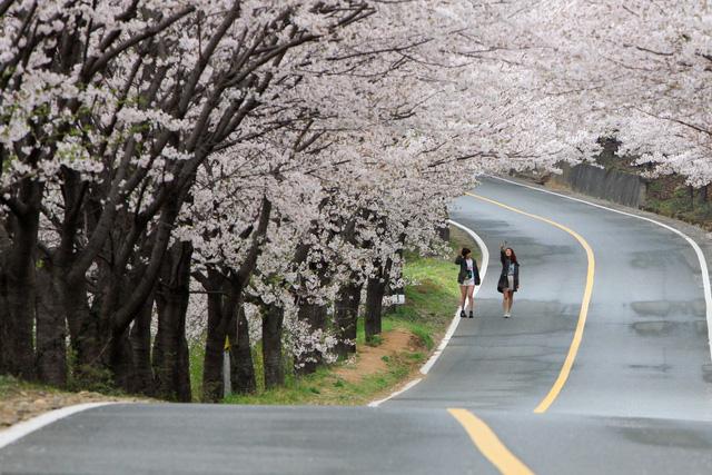 Rộn ràng mùa lễ hội hoa Hàn Quốc - Ảnh 1.