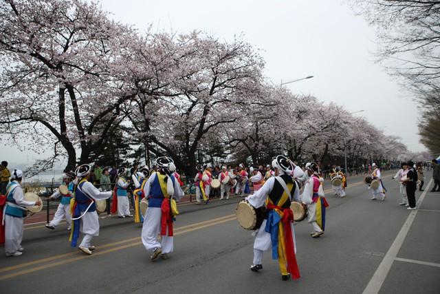 Rộn ràng mùa lễ hội hoa Hàn Quốc - Ảnh 2.