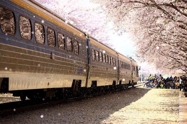 Rộn ràng mùa lễ hội hoa Hàn Quốc - Ảnh 4.