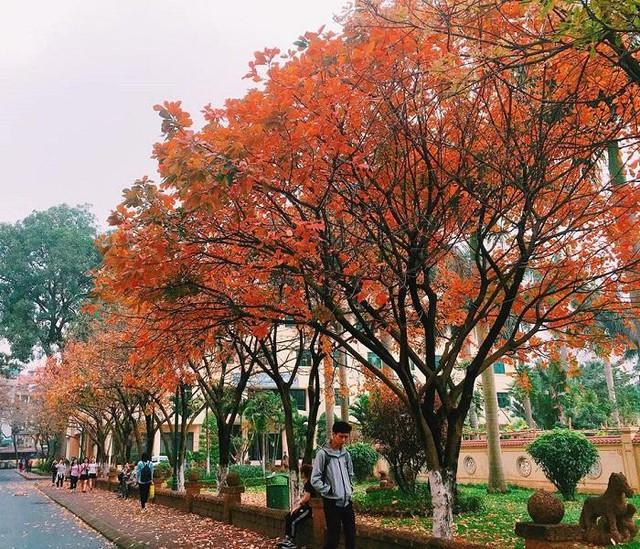 Những trường đại học có khuôn viên đẹp như khu nghỉ dưỡng - Ảnh 11.