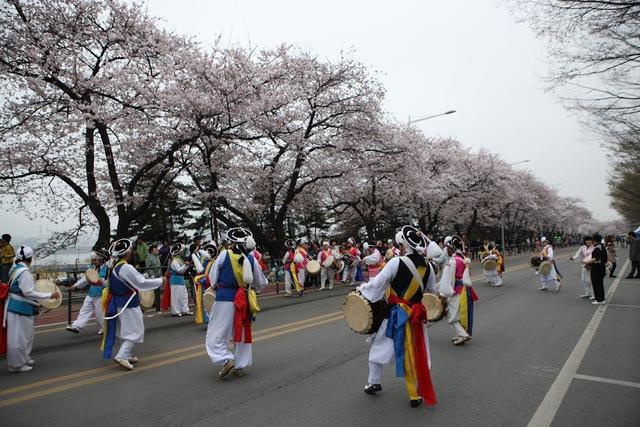 Đến xứ Hàn, đừng quên mục sở thị những thiên đường hoa anh đào tuyệt đẹp này - Ảnh 4.