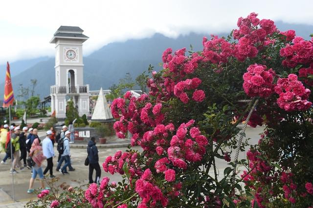 Vườn hồng khủng tại Fansipan đốn tim du khách - Ảnh 2.