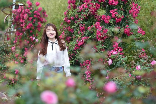 Vườn hồng khủng tại Fansipan đốn tim du khách - Ảnh 3.