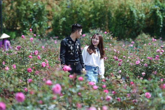 Vườn hồng khủng tại Fansipan đốn tim du khách - Ảnh 4.