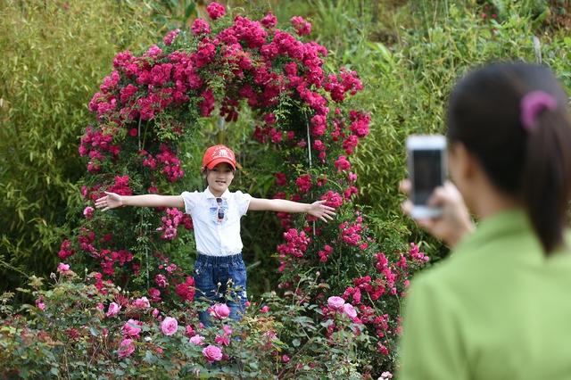 Vườn hồng khủng tại Fansipan đốn tim du khách - Ảnh 6.