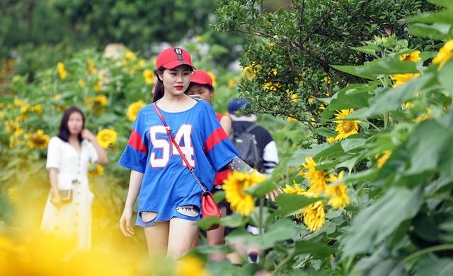 """Tò mò với cuộc thi """"Ai đẹp hơn hoa"""" tại tuần lễ hoa hướng dương Fansipan 2018 - Ảnh 8."""