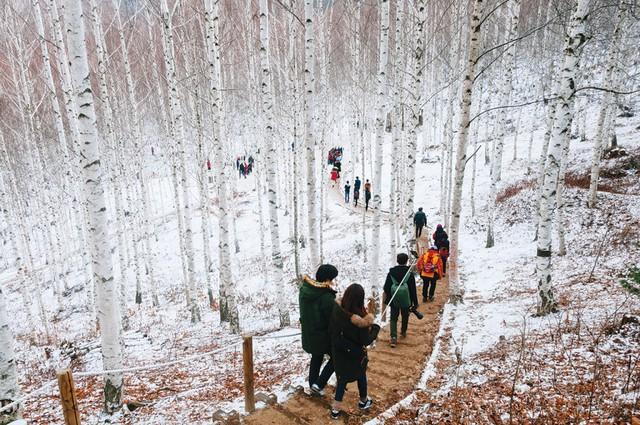 Đến xứ Hàn, thực hiện giấc mơ chạm vào tuyết trắng - Ảnh 1.