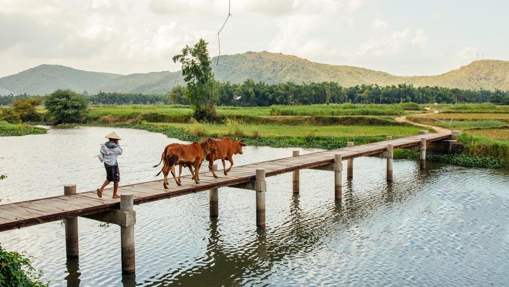 """Hãy đến những nơi này để thấy Phú Yên còn đẹp hơn những gì bạn thấy trong """"hoa vàng cỏ xanh"""" - Ảnh 1."""