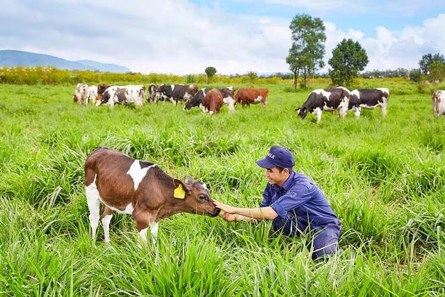 Vinamilk đạt chứng nhận trang trại bò sữa organic đầu tiên tại Việt Nam - Ảnh 1.