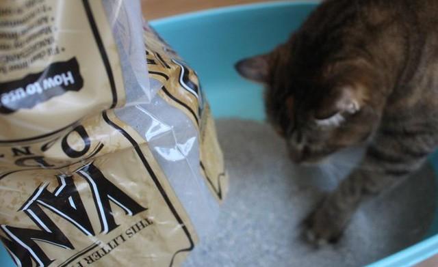 Quên xỉ than đi, các bé mèo chỉ thích cát vệ sinh thôi - Ảnh 6.