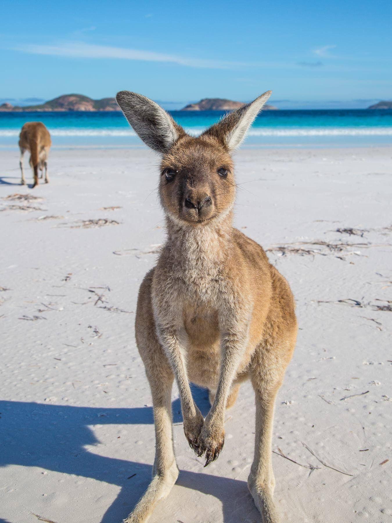 8 điều ít ai biết về phong cách sống của giới trẻ Úc - Ảnh 4.