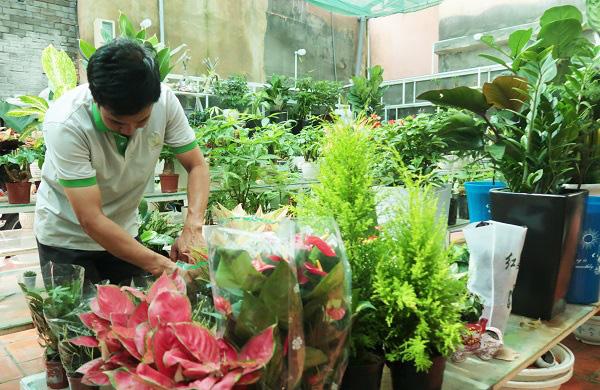 Nở rộ trào lưu sử dụng cây xanh trang trí văn phòng tại các thành phố lớn - Ảnh 1.