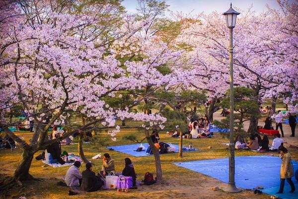 Đến Hàn Quốc vào tháng 3, tháng 4 để được đắm chìm trong thế giới lãng mạn của hoa anh đào - Ảnh 2.