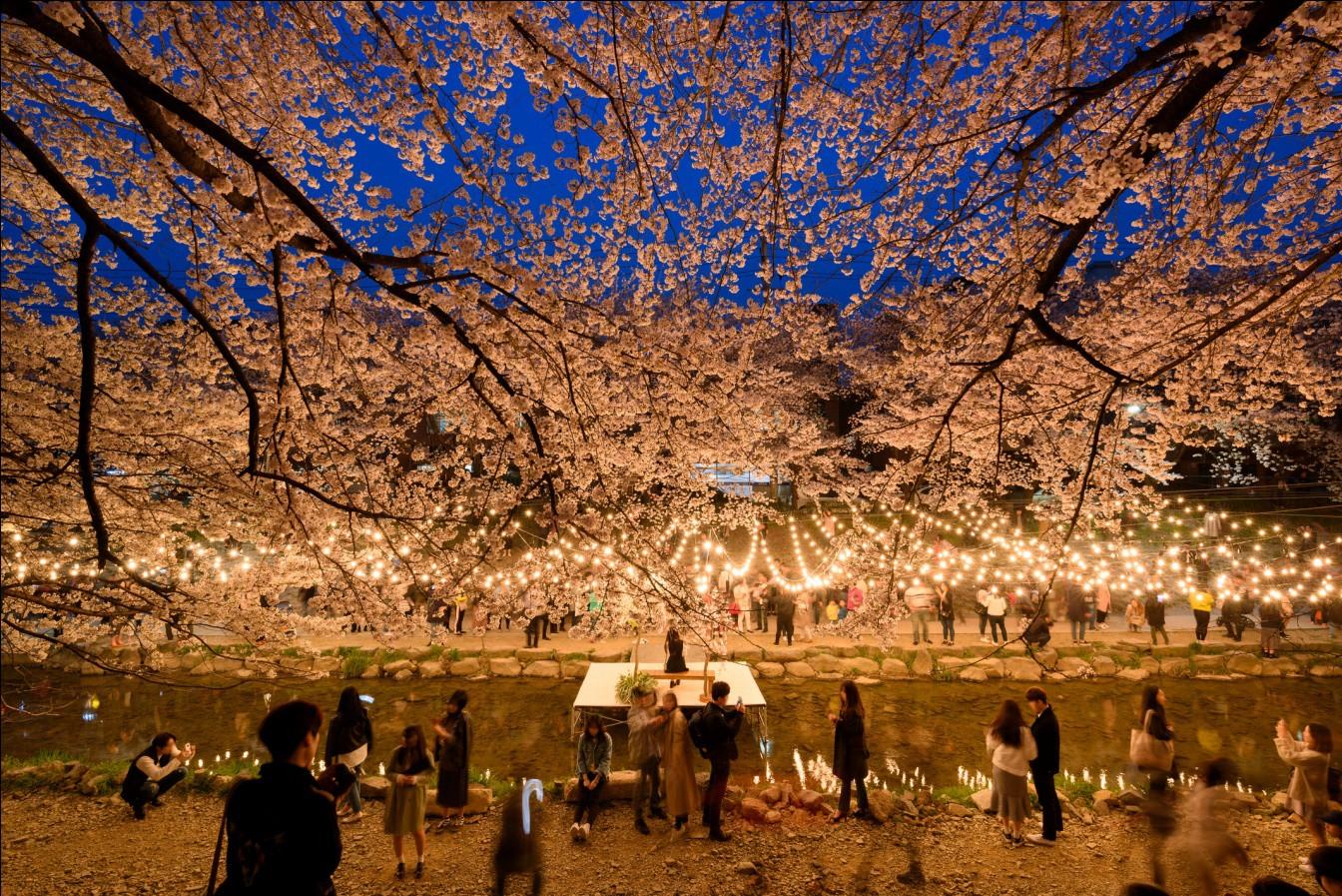 Đến Hàn Quốc vào tháng 3, tháng 4 để được đắm chìm trong thế giới lãng mạn của hoa anh đào - Ảnh 4.
