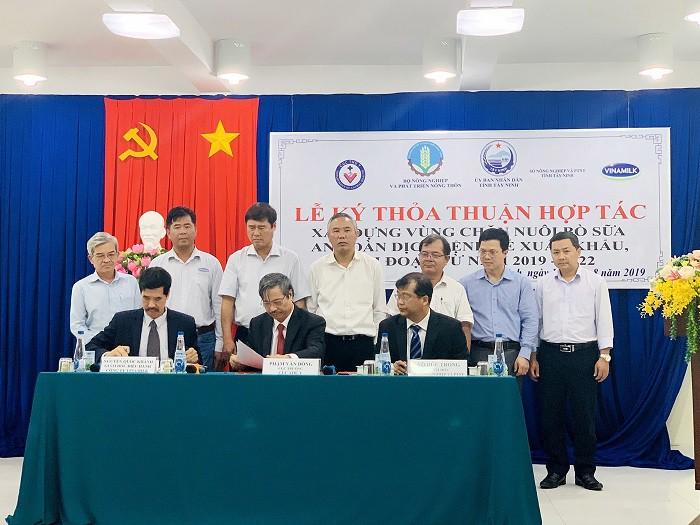 Xây dựng vùng chăn nuôi bò sữa an toàn dịch bệnh được quốc tế công nhận tại Tây Ninh - Ảnh 1.