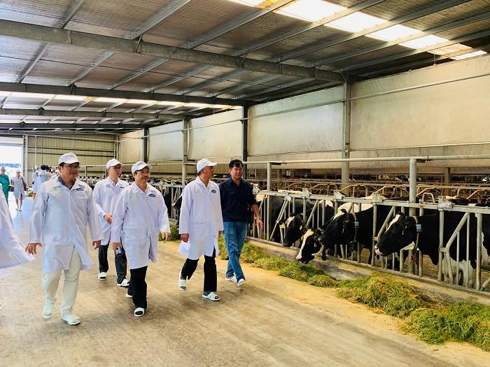 Xây dựng vùng chăn nuôi bò sữa an toàn dịch bệnh được quốc tế công nhận tại Tây Ninh - Ảnh 5.