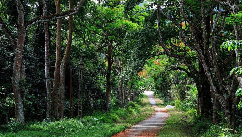 Những vườn quốc gia nổi tiếng Việt Nam bạn nhất định phải ghé thăm một lần - Ảnh 3.