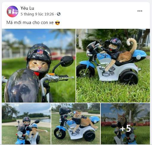 Yêu Lu: Fanpage thu hút hàng triệu tín đồ yêu thú cưng - Ảnh 3.